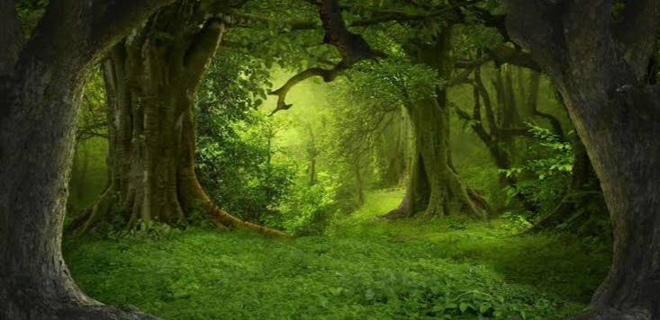 Nature the best teacher